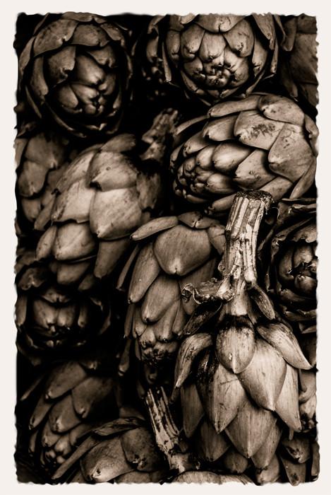 Artichokes in SepiaDSC_0354_