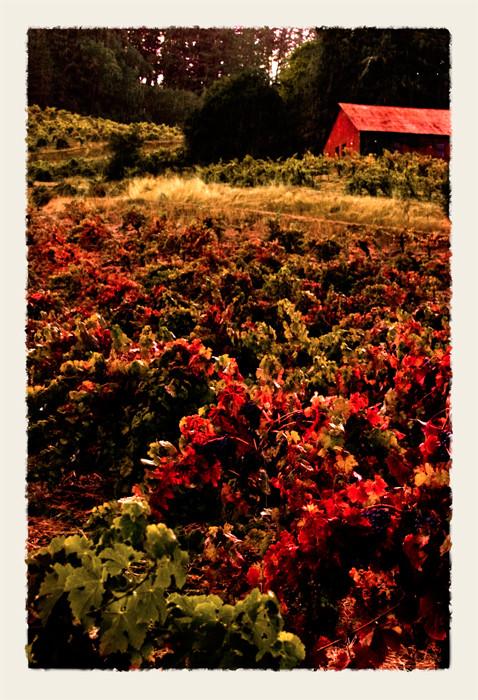 Red BarnDSC_0729_